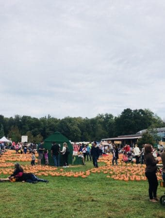 Pumpkin Patch at Harvest Farm Moon and Orchard